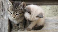 7 милых котят на рабочий стол