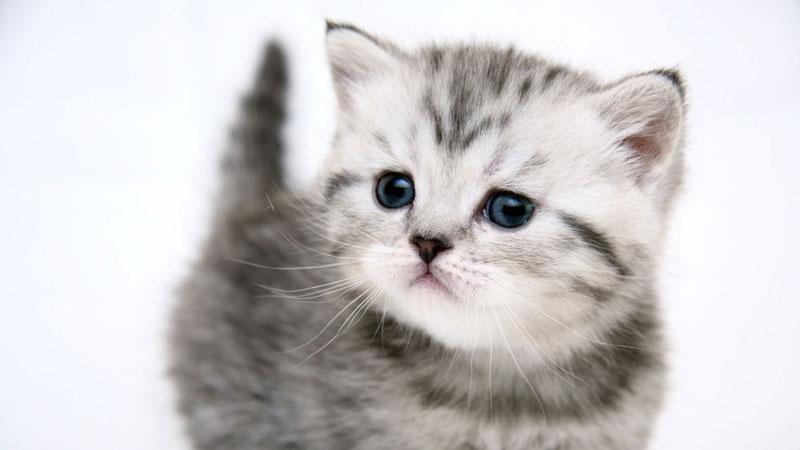 котята картинки скачать