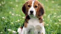 Красивые щенки на рабочий стол (10шт.)