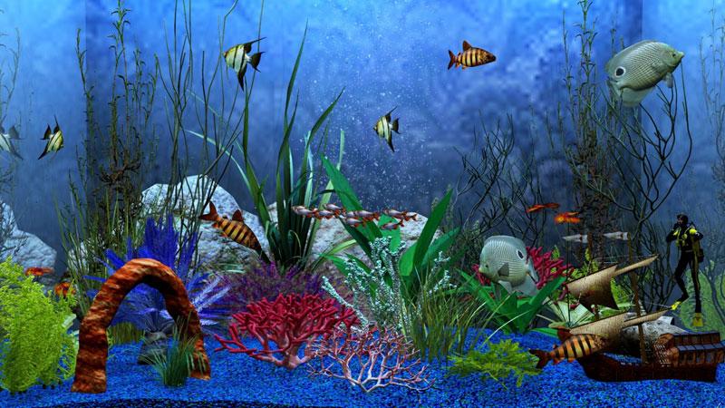 картинки на рабочий стол рыбки