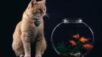 Рыжие коты на рабочий стол (11шт.)