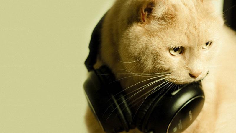 скачать с котами картинки