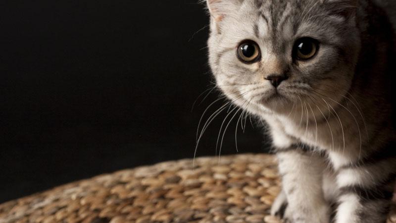 коты на рабочий стол