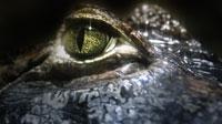 Обои рептилий (15шт.)